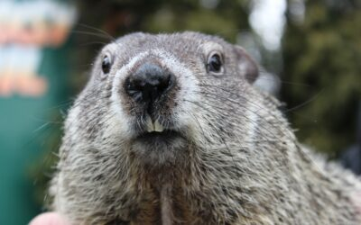 Groundhog Day 2021 – A Virtual Holiday