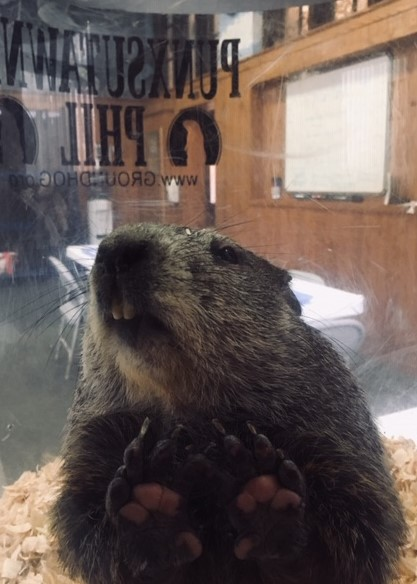Groundhog Day Holiday hours